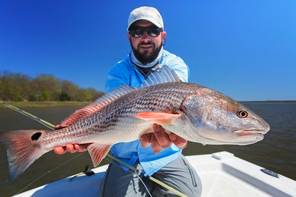 Fly angler with redfish